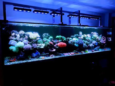 akvodecor pakar aquarium air laut  aquascape indonesia