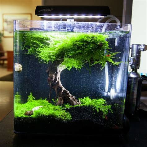 Nano Aquascapes by 25 Best Ideas About Nano Aquarium On Betta