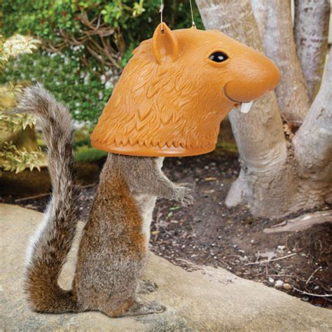 Big Squirrel Feeder big squirrel feeder the green