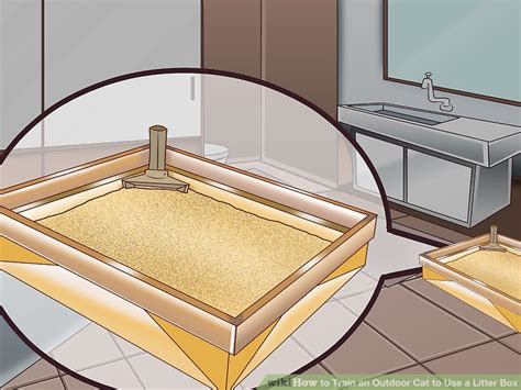 how to a to use a litter box how to an outdoor cat to use a litter box with pictures