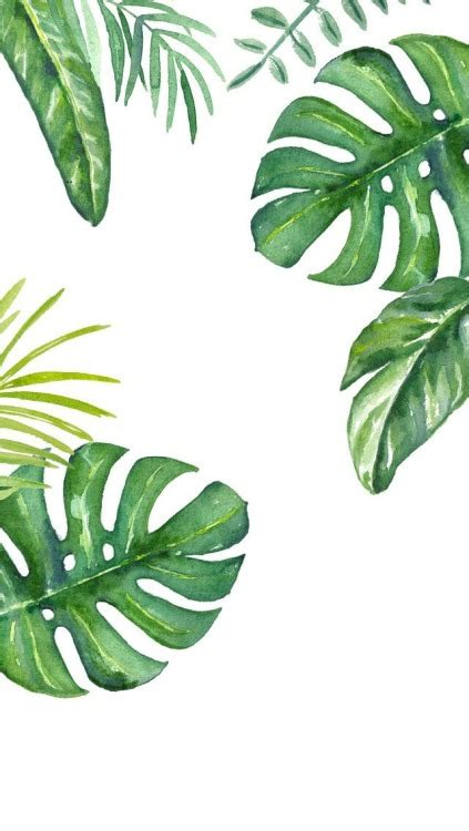 wallpaper daun palma palm leaves tumblr