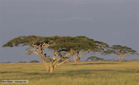 Boneka Grassland By Elie Gallery grassland biome trees gallery 974 investingbb