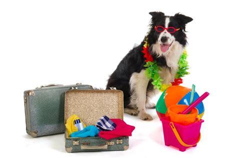 Book Your Travel To Dreamland Pet Pet Pet Product 2 by Pet Friendly Travel Tours Market
