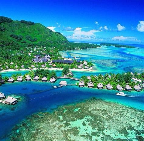 17 best images about polynesian 17 best images about tahiti on buses pets and