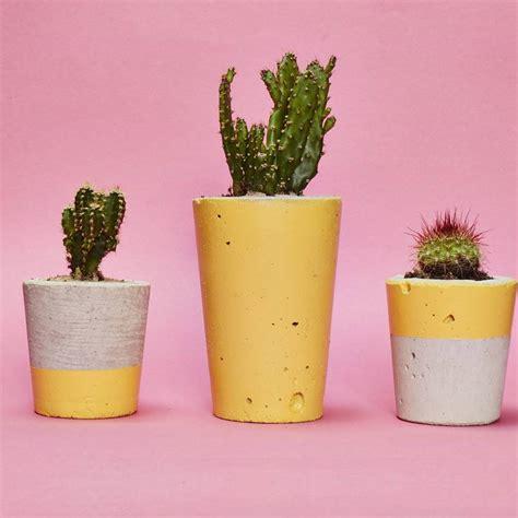 cactus planters yellow concrete plant pot with cactus succulent by hi