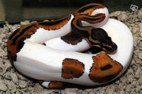quizz serpents 2 quiz serpents