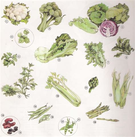 verduras y vegetales en ingles vocabulario frutas y verduras en ingles fruit and vegetables