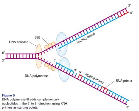 what is a template in dna template dna http webdesign14