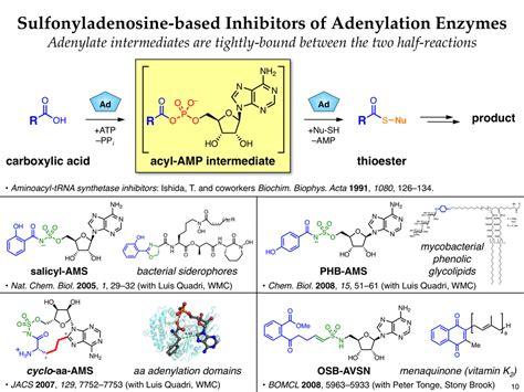 design an enzyme experiment the derek tan lab rational drug design of adenylation