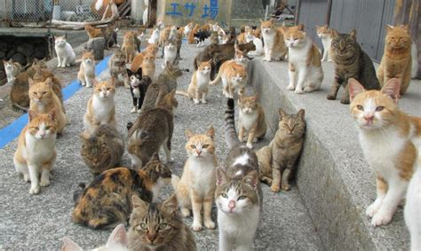 cat island japan s cat island finds purr fect solution to food crisis
