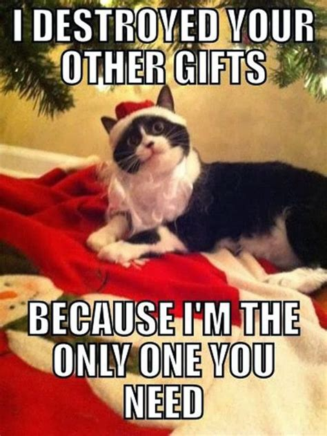Christmas Cat Meme - 30 funny animal christmas quotes cutest cats