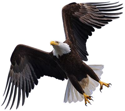 Flying Eagle Fast Blade Black Blue eagle single sided suppliers