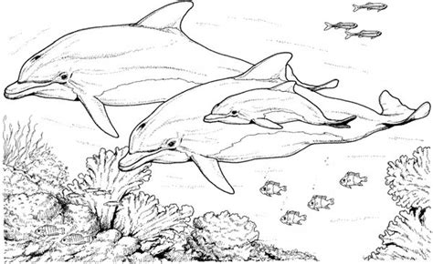 free printable winter the dolphin coloring pages for kids