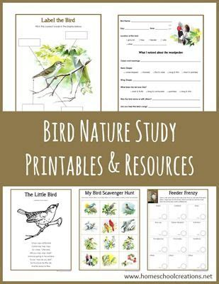 printable bird quiz 17 best ideas about nature study on pinterest about