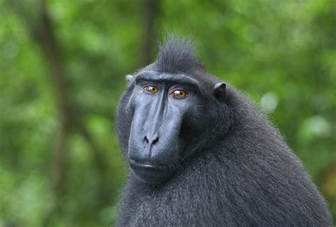 study considers  coalition building  monkeys relates  human social structures