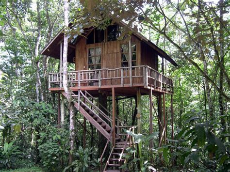 house trees tree houses photo gallery tree houses hotel costa rica hotel and resort