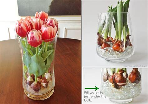 Bibit Bunga Casablanca ako vypestova絅 tulip 225 ny vo v 225 ze www zozivota sk