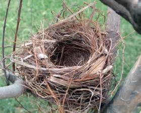 quotes about bird nests quotesgram