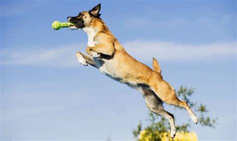 splash dogs splash dogs california state fair