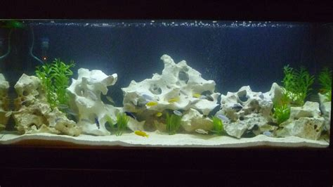Cichlid Aquascape by Cichlids New Aquascape