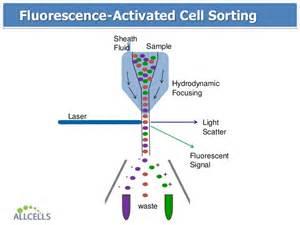 Light Fluorescent Allcells Flow Cytometry Webinar 09 26 2013
