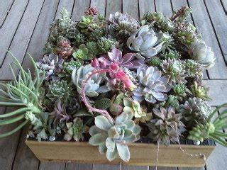 make your own hanging planter create your own wall succulent hanging planter francesca