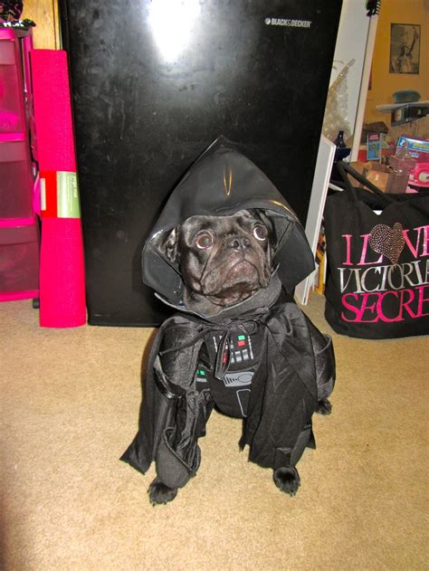 pug darth vader costume contest entry darth vader pug when your name is vader is there really any other