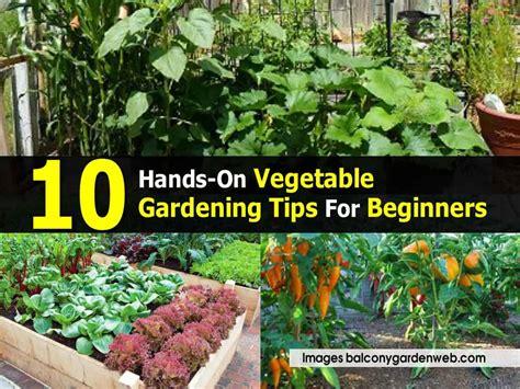 10 on vegetable gardening tips for beginners