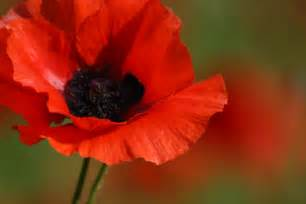 Published november 15 2011 at 3888 215 2592 in poppy s embrace