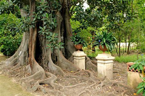 giardino botanico palermo orto botanico di palermo cose di casa