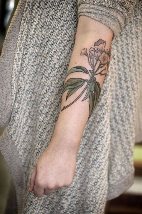 mountain laurel tattoo 8 best tsuga canadensis images on canadian