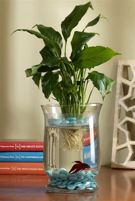 Betta Fish Planter by Best 25 Fish Bowl Decorations Ideas On