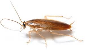 insectes rants entreprise de d 233 ratisation de