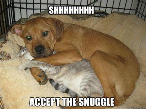 Snuggle Meme - accept the snuggle memes quickmeme