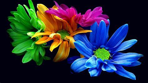 fiori colorati immagini sfondo quot colorati fiori quot 1920 x 1080 3d computer