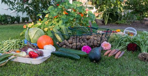 Gardening Fruits And Vegetables Free Photo Autumn Harvest Garden Vegetables Free