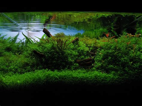 ada aquascaping ada aquascaping contest 2008 by berkleyone on deviantart