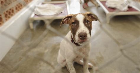 shelters in ct adoption places in ct puppy