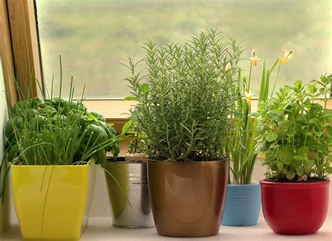Quiet Corner Indoor Winter Gardening Tips Quiet Corner Winter Gardening Ideas