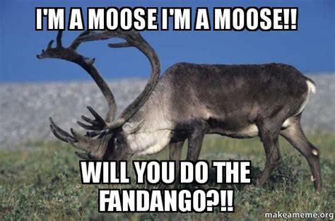 Canadian Moose Meme - image gallery moose meme