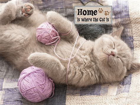 design works home is where the cat is house for my chaos what you should know before taking a