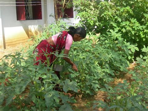 Kitchen Garden India Un And Partners Seek 34 Million To Assist Drought