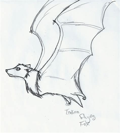 how to draw doodle 4 indian flying fox doodle by iceheart lunarae on deviantart
