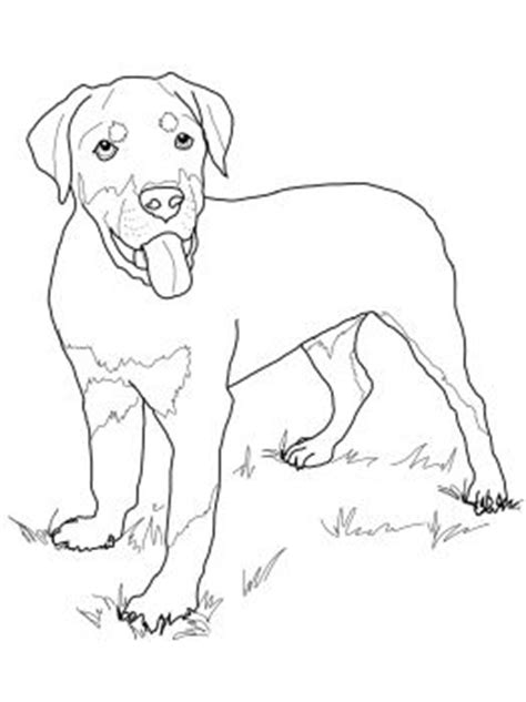 guard dog coloring page puppys rottweilers and rottweiler puppies on pinterest