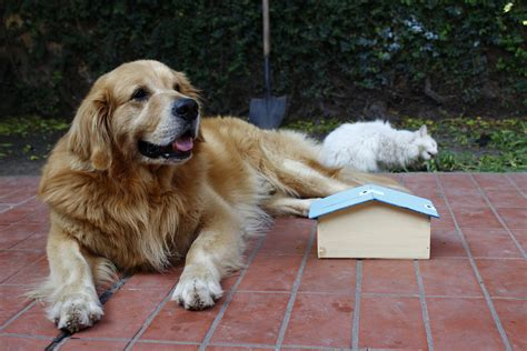 how to build a good dog house 5 free plans showing you how to build a dog house
