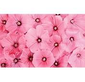 Pin Wallpapers Bunga Mawar The On Pinterest