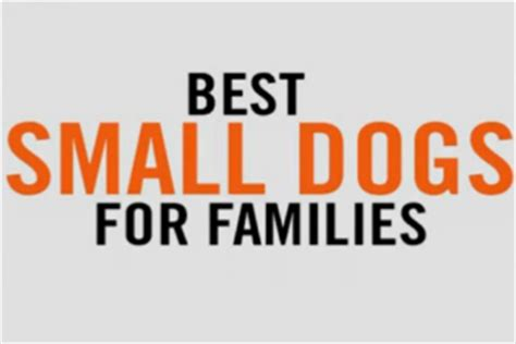 best small family dogs 5 best small dogs for today s parent