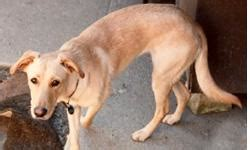 anorexia in dogs how to get an anorexic to eat