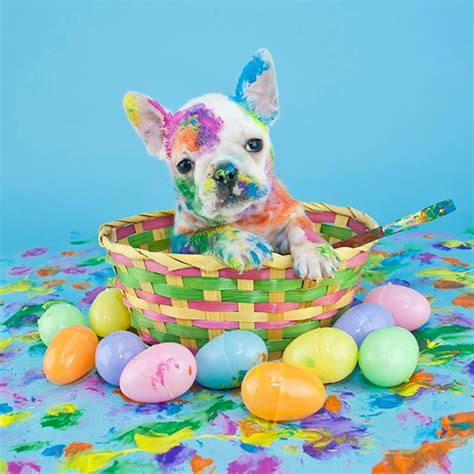 5 Adorable Families Celebrating Easter by These Pictures Of Easter Animals Will Make Your Day Asda