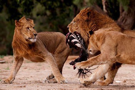 10 Amazing Portraits Of Animals by Amazing Animal Ups 42 Pics Izismile